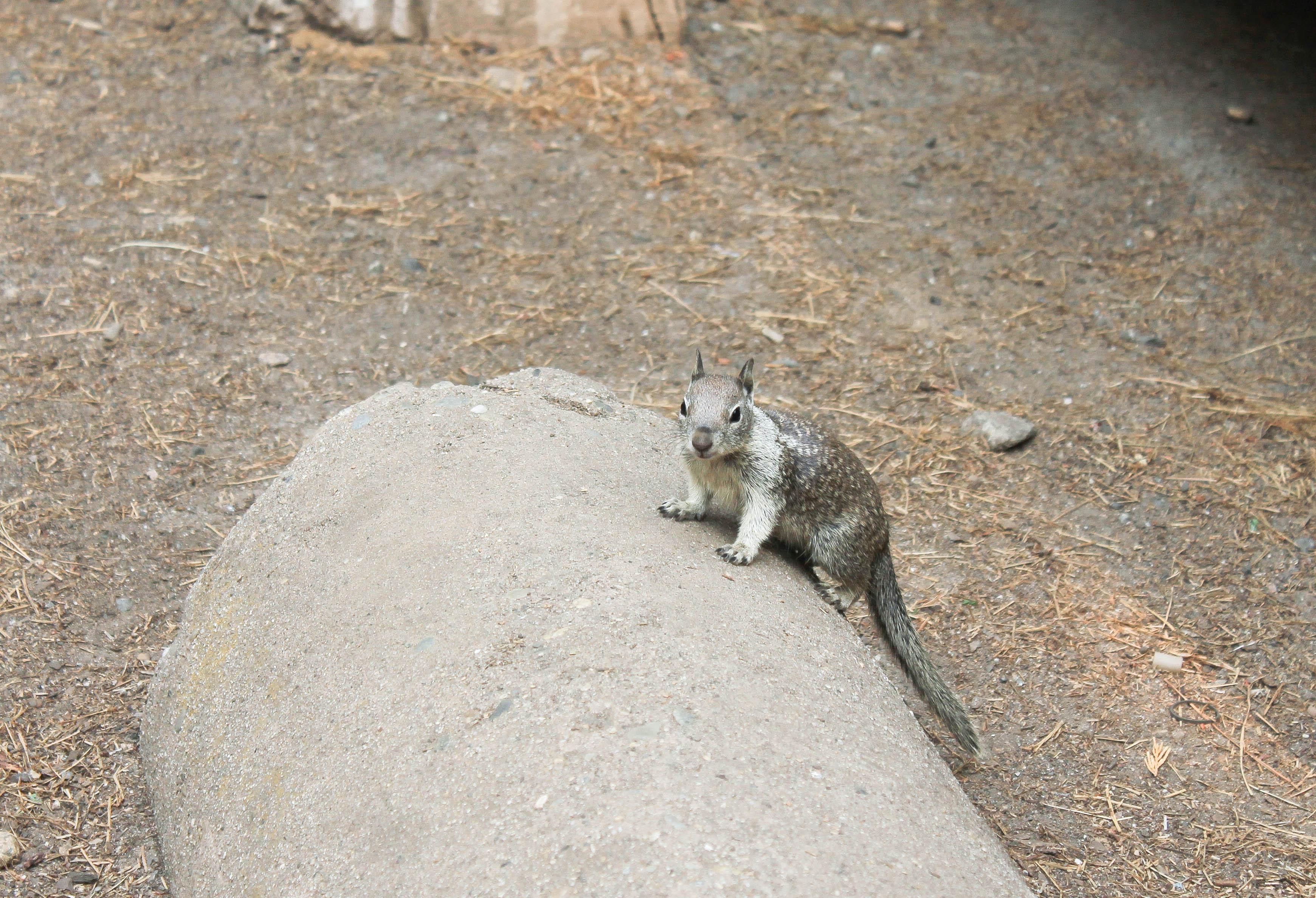 Eichhörnchen auf dem Campingplatz
